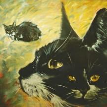 Kot Boluś