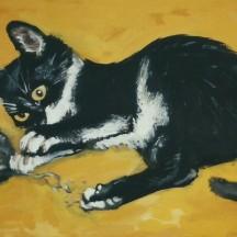 kotek Boluś